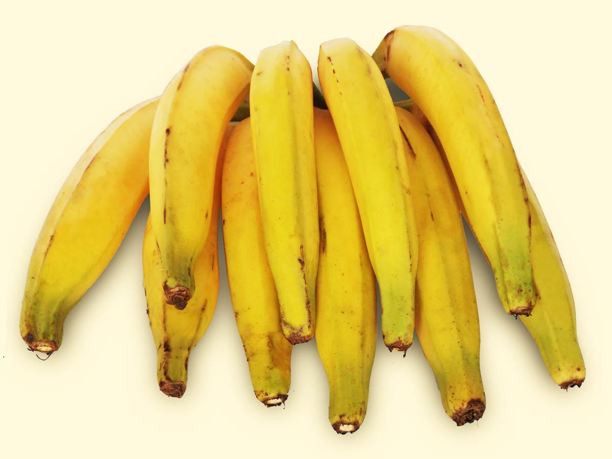 Foto de um cacho de Banana Terra - Taubafrut
