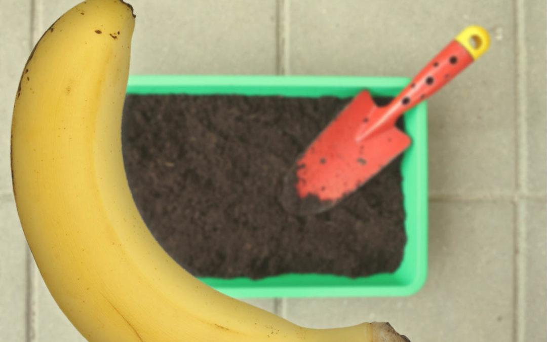 Casca de banana como adubo caseiro para hortas