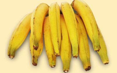 Banana-da-terra: conheça os diferentes tipos de banana