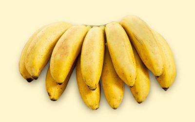 Banana-Ouro: conheça os diferentes tipos de banana